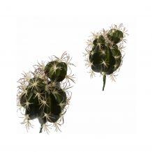 ptmd Decoratie Cactus
